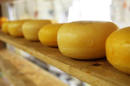 Käse - typisch niederländisch, oder?